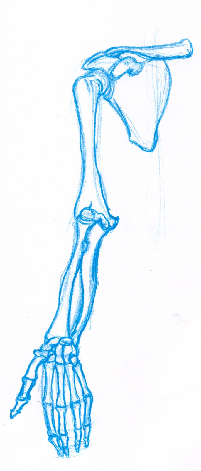 Skeleton_Arm